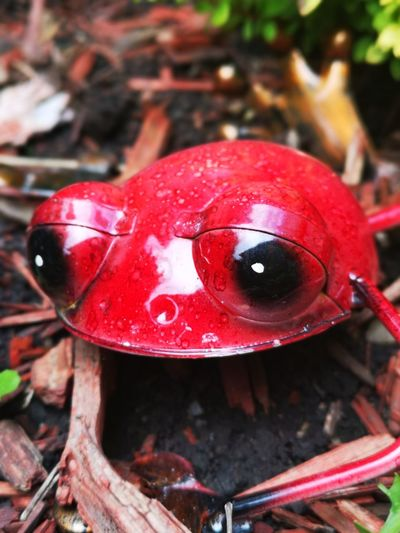 One cute red frog in the garden Garden Ornament No People Unedited Color Photo Beauty In Ordinary Things I Love Red! Red Metallic Frog Red High Angle View Close-up The Mobile Photographer - 2019 EyeEm Awards
