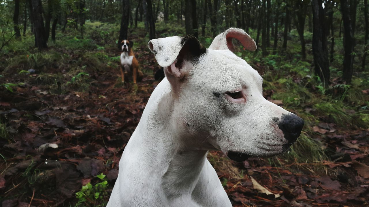 Close-up of dog on field against tree