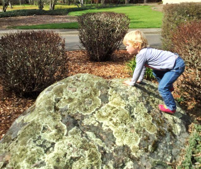 Violet climbing a second-biggest rock 13048553