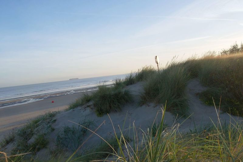 Beach life Beachphotography Duinen Duinen En Zee Sea And Sky No Filter, No Edit, Just Photography Water Sky Beach Plant Horizon Over Water Scenics - Nature Sand Grass Horizon Land Beauty In Nature Outdoors Day Nature EyeEmNewHere