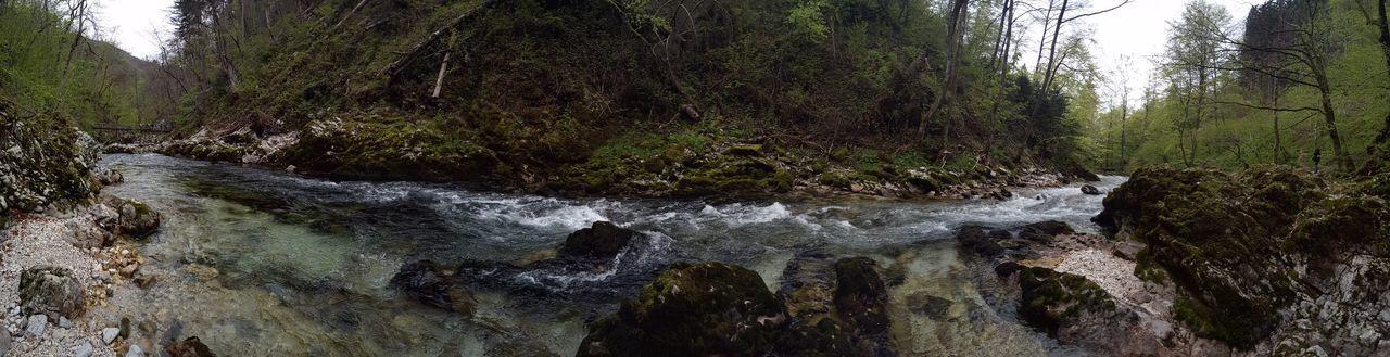 Tree Nature Water Outdoors Beauty In Nature Stones Rocks And Water Soteska Vintgar Vintgar Klamm Wildbach Footbridge Forest River Motion EyeEmNewHere Neighborhood Map The Great Outdoors - 2017 EyeEm Awards