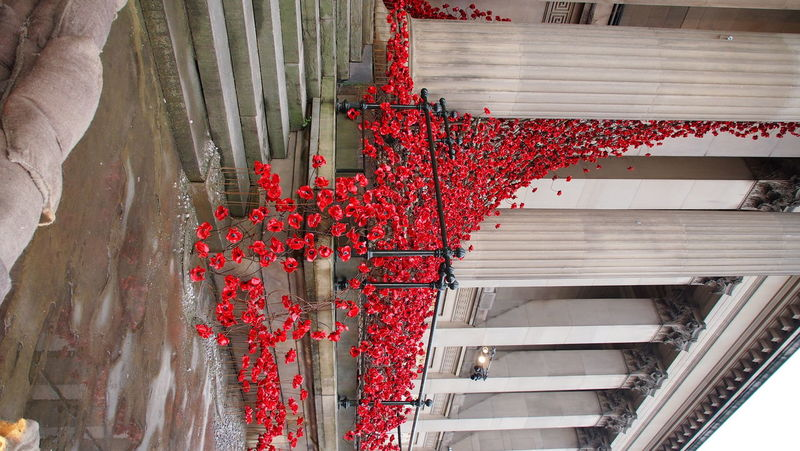 Ceramic Art Liverpool Paul Cummins Poppies  Poppy Field Remembrance St Georges Hall Weeping Window