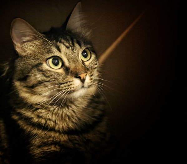 Check This Out Eye4photography  Portrait Cute Pets Cat Cats Of EyeEm Cat♡ Cats I Love My Cat Nature