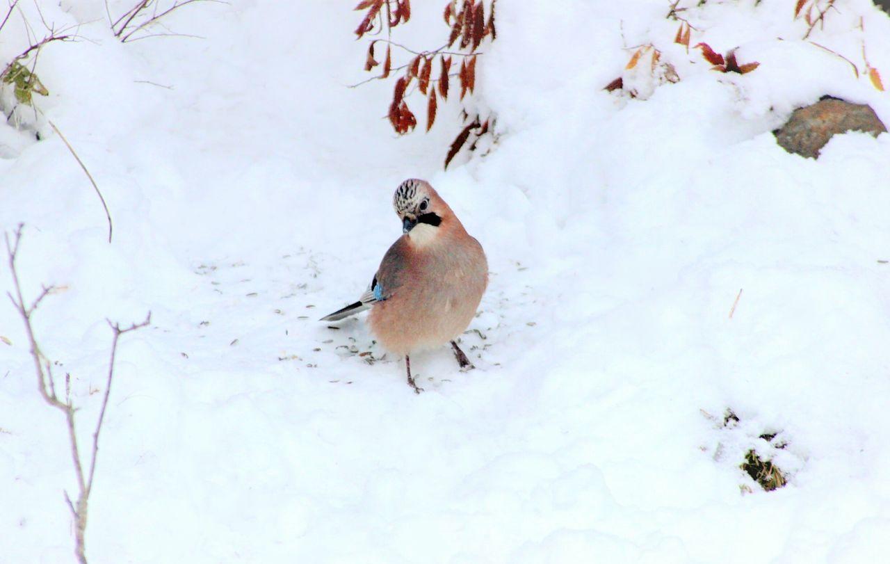 Bird Perching On Snow Field
