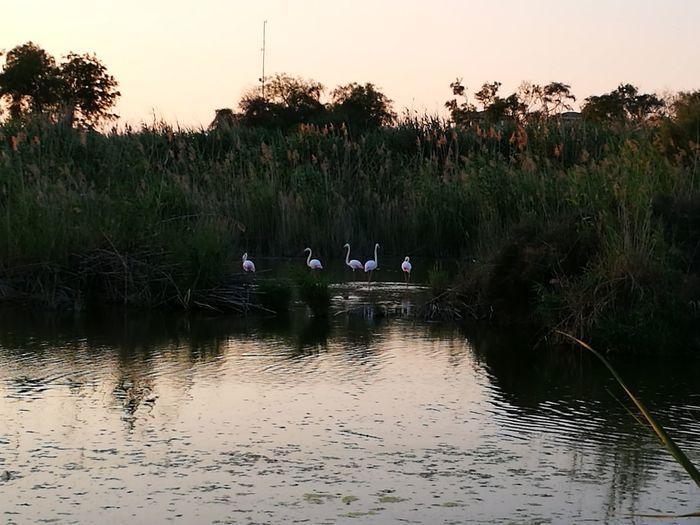 Lake Reflection Water Bird Sunset Animal Wildlife Nature Landscape Tranquility Outdoors Tree Sky Animal Themes Day