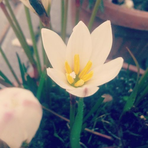 Flower Fall Dajcie Mi Summer Paradise