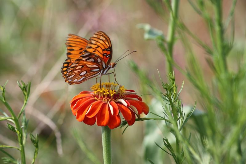 Nature at it's Most Delicate Insect Animal Wildlife Animal Themes Invertebrate Animal Animals In The Wild Butterfly - Insect Beauty In Nature Flowering Plant Close-up Petal Fragility