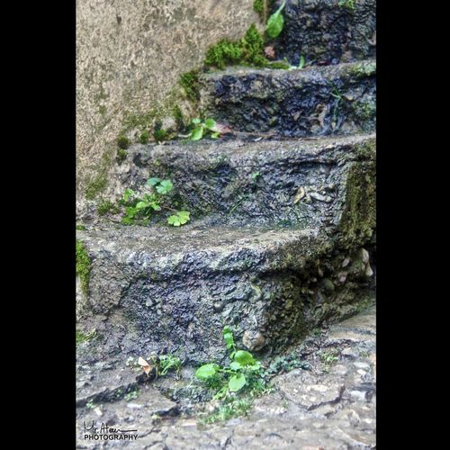 Stairs to the heavens Outdoors No People Textured  Plant Day Nature Tree Close-up Fragility Stairs Iran♥ Masoleh