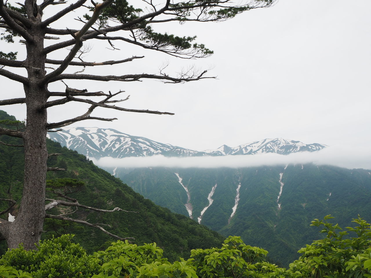 mountain, nature, tree, forest, beauty in nature, landscape, no people, sky, outdoors, mountain range, snow, day, range, freshness