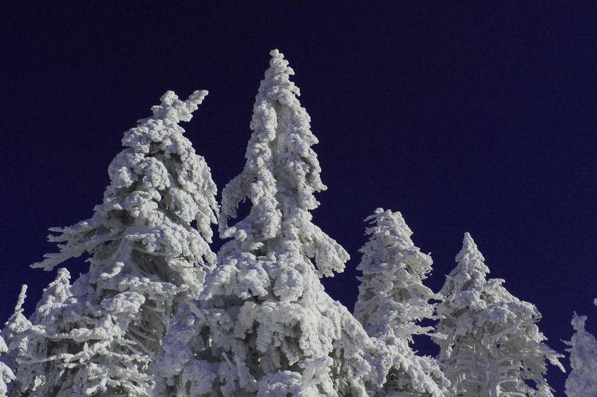 Brocken Harz Bilder Landscape Mountain View Nature_collection Winter Winter Wonderland Winterwald