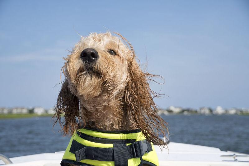 Dog looking away in sea against sky
