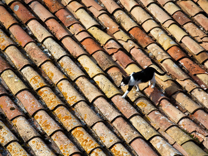 Animal Themes Animal One Animal Mammal Domestic Animals Pets No People Domestic Vertebrate Architecture Roof Domestic Cat Cat Feline Day In A Row Pattern Roof Tile High Angle View Full Frame Copyspace Walking One Cat Old Roof Sunlight Cat On The Roof Clay Tiles