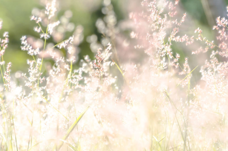 EyeEm Nature Lover EyeEm Gallery Mild Days Pink Soft Beauty In Nature Close-up Day Flower Flower Head Fragility Freshness Gentle Grass Grass Flower Growth Nature No People Outdoors Pink Color Plant Purple Soothing Springtime Sunlight
