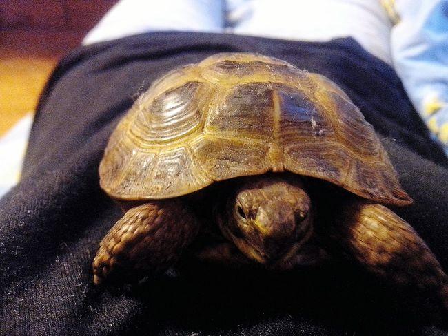 черепаха моя животные