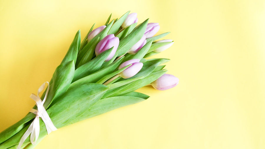 Close-up of tulip against white background
