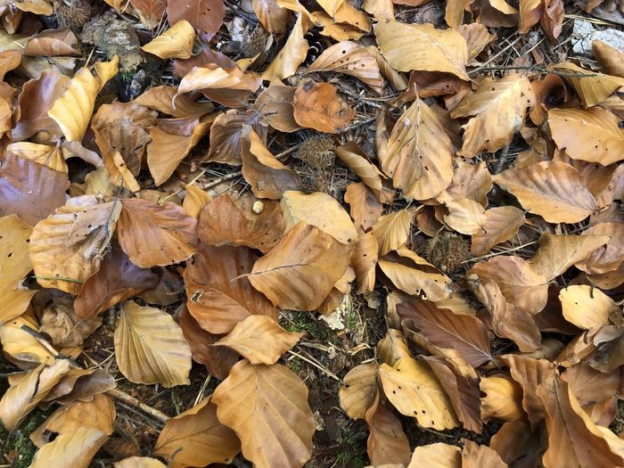 Full Frame Backgrounds Autumn Leaf Dry Leaves Plant Part Abundance No People Large Group Of Objects Day Close-up Change Nature Brown Beauty In Nature Yellow Vulnerability  High Angle View Fragility Outdoors Natural Condition Dried Fall