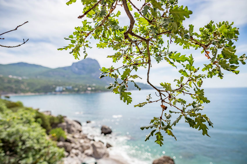 Beach Beauty In Nature Branch Day Focus On Foreground Growth Leaf Nature No People Outdoors Plant Plant Part Scenics - Nature Sea Sky Tranquil Scene Tranquility Tree Water