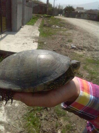 cute male turtle First Eyeem Photo