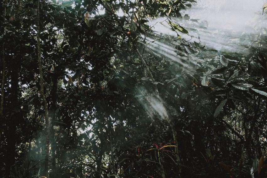 Lintau, 2018 Travel Destinations Nature Landscape People Green Olympus