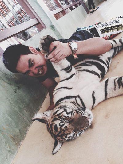 Tiger Kingdom Phuket,Thailand Wrestling
