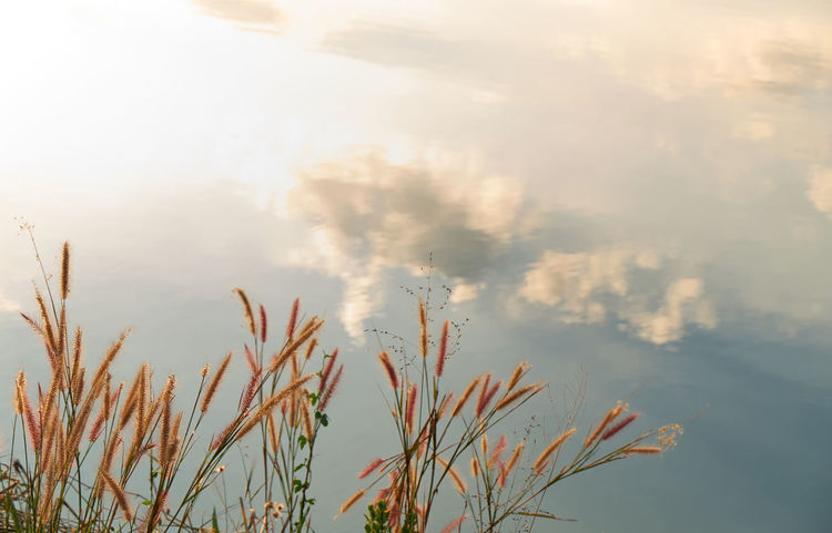 Copy Space Grass Beauty In Nature Close-up Day Fountain Grass Freshness Growth Nature No People Outdoors Plant Reflections In The Water Sky Tranquility