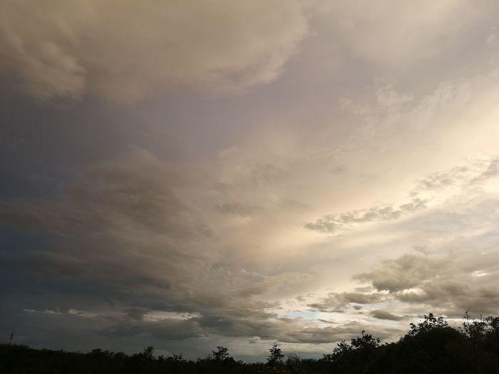 sky and clouds Tree Sunset Storm Cloud Dramatic Sky Sky Cloud - Sky