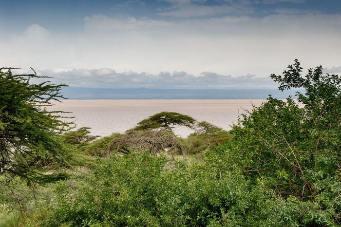 Ethiopia Beach Beauty In Nature Cloud - Sky Day Grass Growth Horizon Over Water Landscape Nature No People Outdoors Plant Sand Scenics Sea Sky Tranquil Scene Tranquility Tree Water