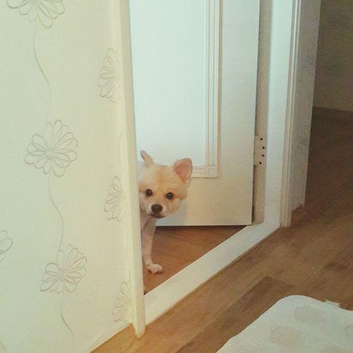 까꿍 Dog Pet