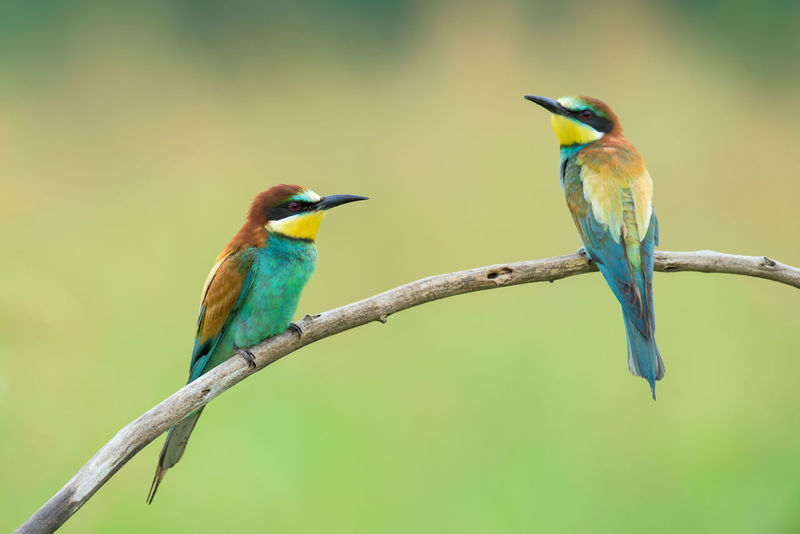 Animal Themes Avian Beak Beauty In Nature Bee-eater Bird Blue Close-up Day Focus On Foreground Green Color Multi Colored Nature No People Outdoors Perching Selective Focus Wildlife