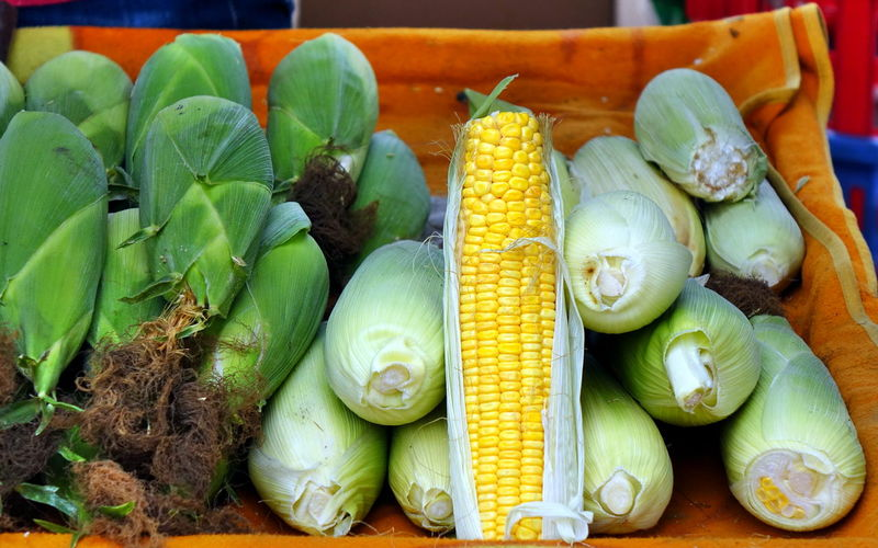 Fresh organic corn on the cob for sale at a local market Food Vegetable Freshness Sweetcorn Raw Food Corn On The Cob Market Yellow Organic Ripe Husks Maize Corn Green Color