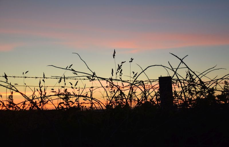 Sunset Silhouette Orange Color Beauty In Nature Tranquility Tranquil Scene Outdoors Field Growth Idyllic Sky Cloud - Sky No People Nightlife Grassy Bank Grasses In Sillouette Fence Ppost Barbedwire End Of Day Sleeping