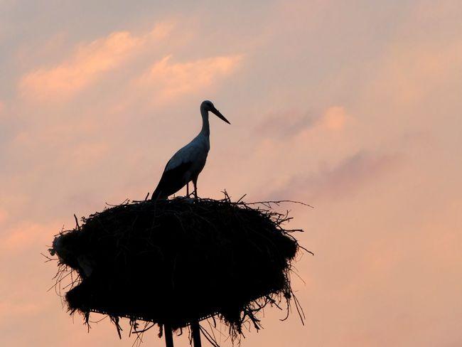 Taking Photos Hello World EyeEm Stork Sky Light Nature Bird Photography