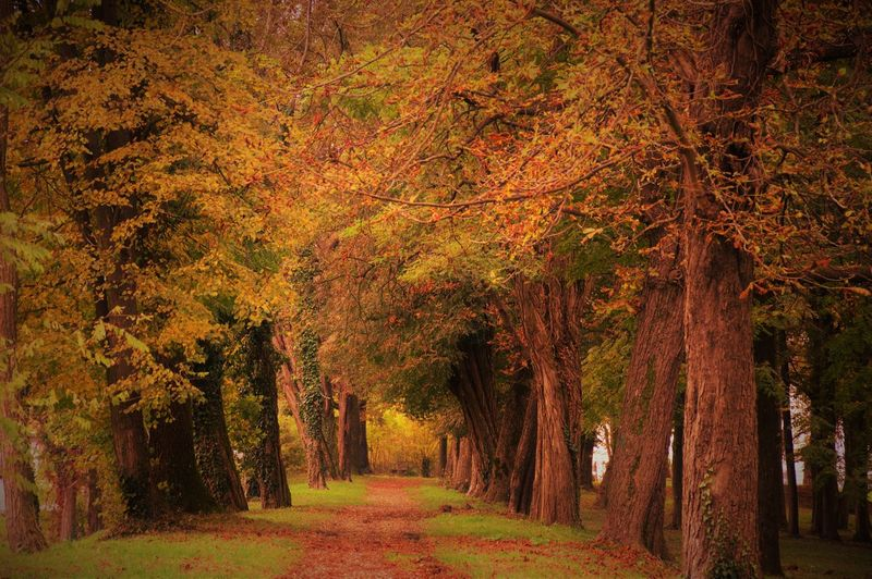 Autumn Tree Nature Change Beauty In Nature Leaf Forest Tranquility Scenics Environment Outdoors Growth No People Tranquil Scene Landscape Day Retro Nikon D3200 IPhoneography Nature Photography Like Nikonphotography Croatia
