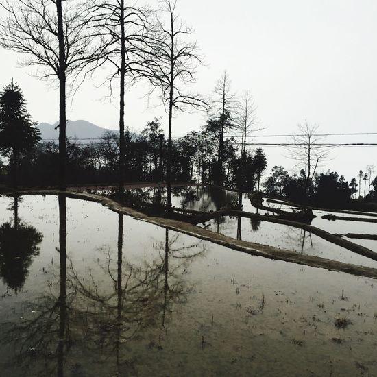 Water Reflections Terrace Gardening Terraced Rice Fields