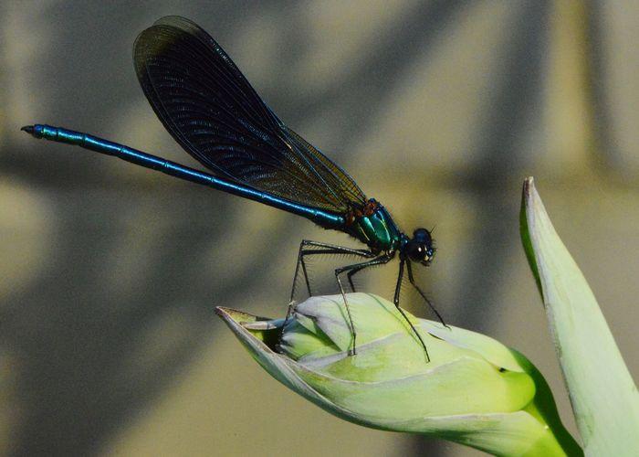 Close-up of a grasshopper