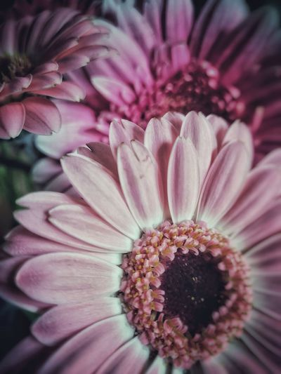 Flower Collection Multi Colored Smooth Detail Focus On Foreground No People Full Frame Photooftheday Popular EyeEm Best Shots EyeEm Selects EyeEm Gallery Pink Color Flower Head Flower Passion Flower Petal Pollen Close-up Plant