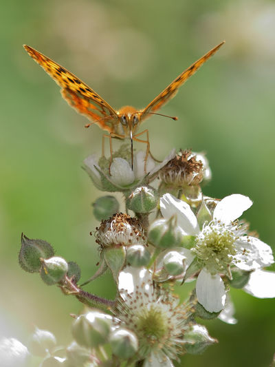 Animal Themes Animal Wildlife Animals In The Wild Beauty In Nature Close-up Day Flower Flower Head Fragility Freshness Growth Insect Nature No People One Animal Outdoors Petal Plant Pollination