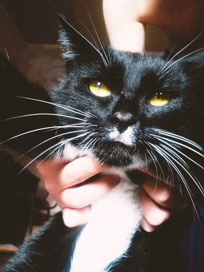 Animal Themes Black Cat Casual Clothing Cat Cat Lovers Cats Close-up Day Domestic Animals Domestic Cat Feline Human Body Part Indoors  Lifestyles Looking At Camera Mammal One Animal One Person Pets Portrait Yellow Eyes