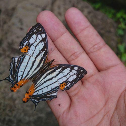 I've got you. Butterfly Hand Butterflies
