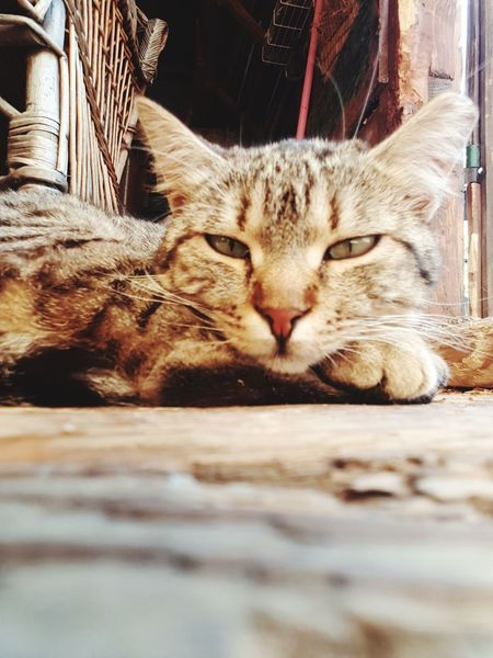 Domestic Cat Pets One Animal Animal Themes Domestic Animals Feline Mammal Indoors  No People Day Close-up EyeEm The Best Shots The Week On EyeEm Tranquility Summer