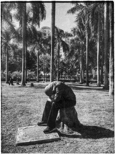 Unknown People Park Palm Trees Subtropical Park Shaddow No Face, No Name Lonliness Hidden Face Blackandwhite Black And White Black & White China Jie t o 街头摄影 佛山 季华园