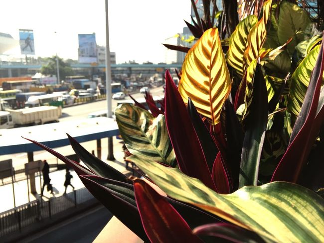 Plants Bus Station