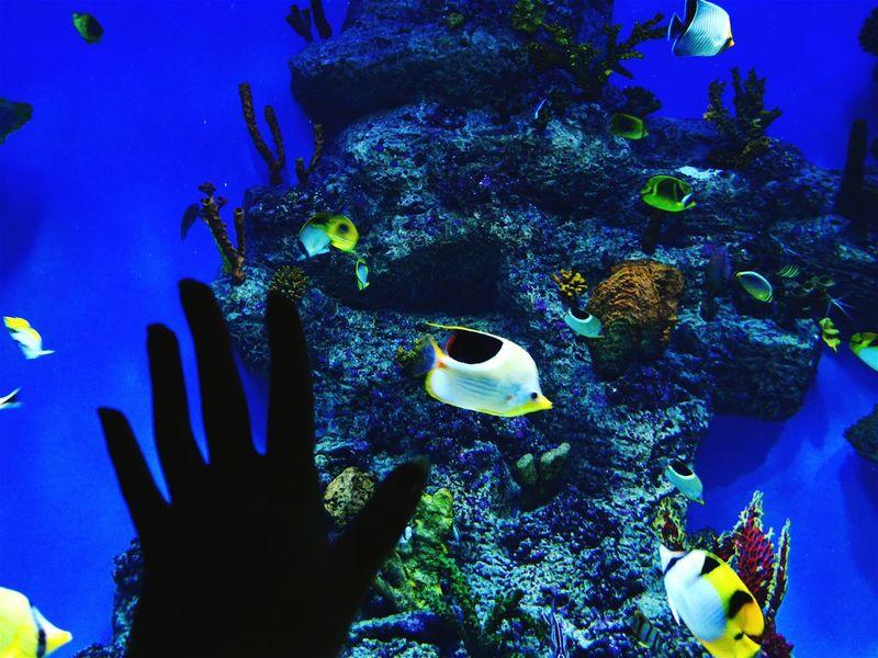 Aquarium Life Hello World Water Eye4photography  Loveanimals Eyemphotography That's MeThat's Me Enjoying Life Waterworld Fish Beautiful Nature Nature Photography Hi! Hand Myhand Amazing Amazing View