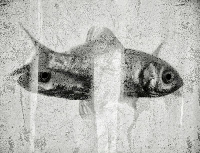 ... just two lost souls swimming in a fish bowl ... Streetphotographer Streetphotography Fishes Goldfish Goldfish In Water Fishbowl in a Coffeebar Souls Wish You Were Here Pink Floyd Bnwphotography Black And White Photography Blackandwhite Bnwmood Black And White Capture The Moment Streetphoto Street Shot Street Black And White Collection  Black And White Portrait Fine Art Fine Art Photography