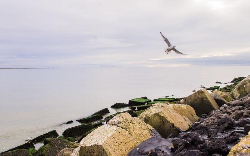 Flights Bird And Beach Bird And Beach Scape Flight Over Rocks Nature Water