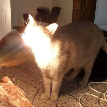 This light smells really good. Why do I see big, giant spots?- he does this like 10 times a day. Meow Catlady Dumbcat BlindCat