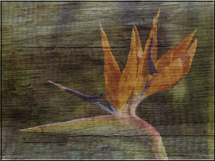 Strelizia Blossom on Wood
