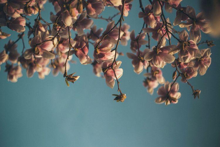 Springtime TheWeekOnEyeEM