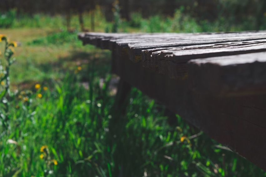 Grass Nature Outdoors Day Wood - Material No People Abandoned Forest Close-up Scenics Tranquility Green Greenery Nealnoahphotography Table Rustic Old Vintage Tone Mood Moody