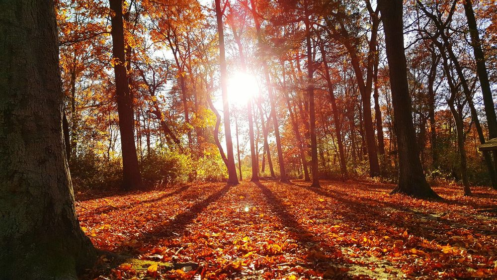 Autumn Collection Autumn Leaves Autumn Colors Colorful Trees Autumn🍁🍁🍁 Sunshine Autumn Trees Sun Light Through Trees WeatherPro: Your Perfect Weather Shot